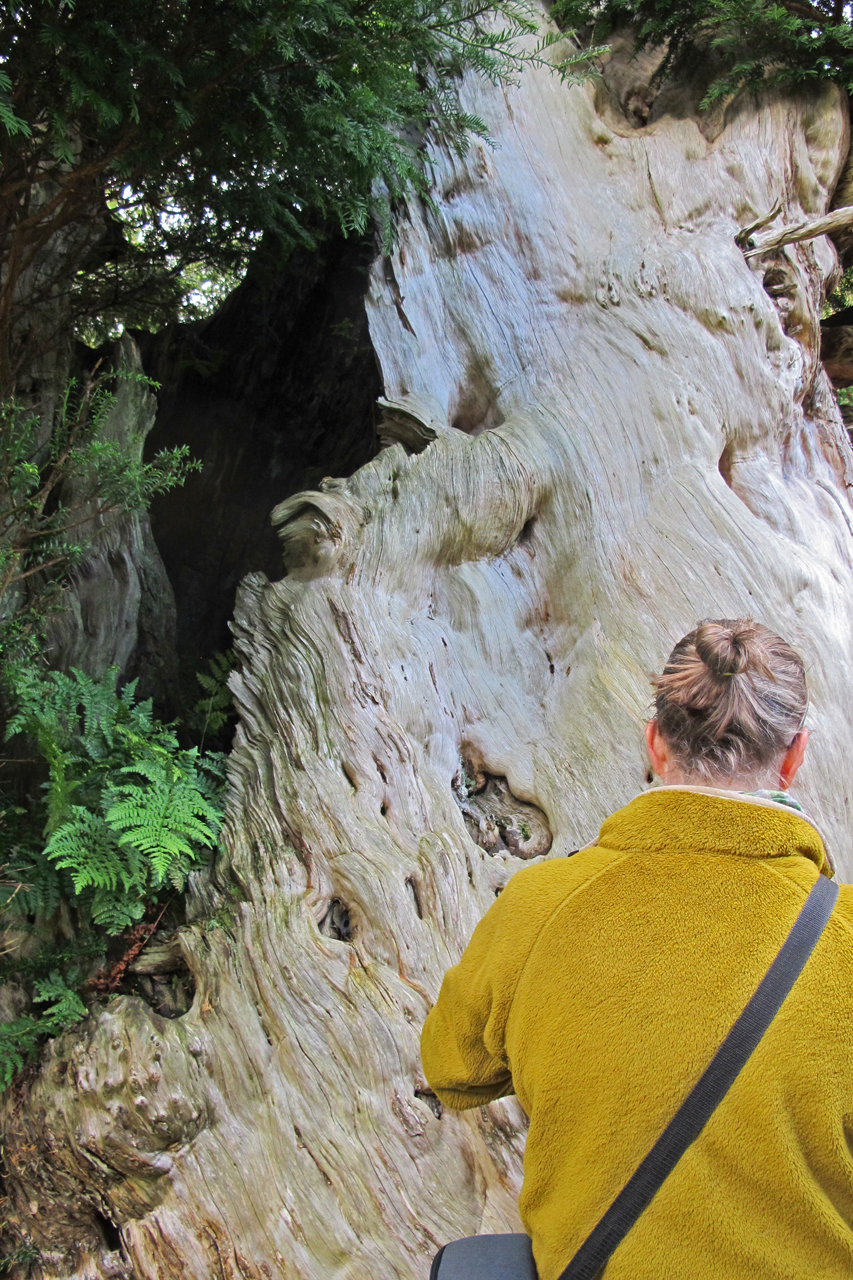 Lis Airey with the Borrowdale Yew