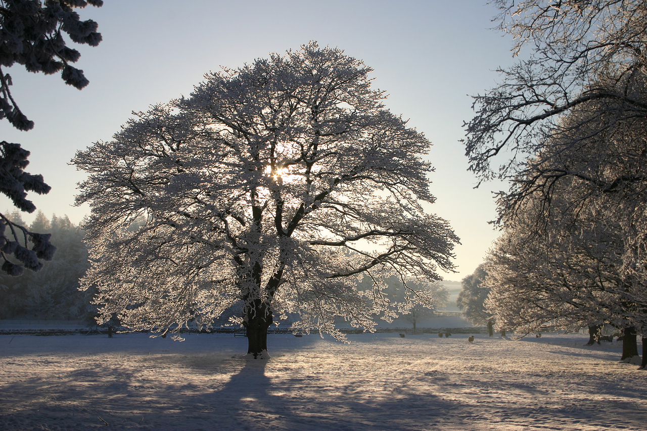 Snow and sunlight turning this 'ordinary' tree into a special one